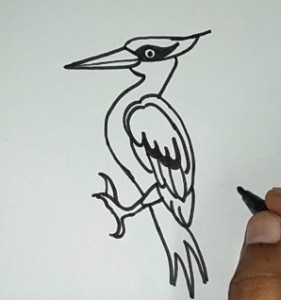 How to draw a woodpecker step by step easy