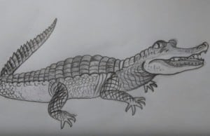 How to draw an Alligator for beginners step by step and easy