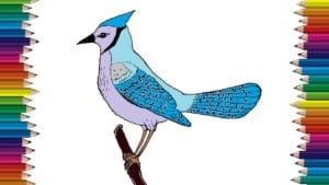 How to draw a blue Jay bird step by step - Bird drawing easy