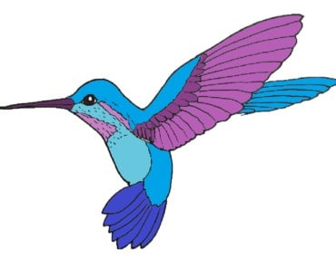 How to draw a Hummingbird step by step - Bird drawing easy
