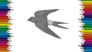 How to draw a Swallow step by step