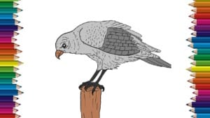 How to draw a hawk step by step - Bird drawing easy