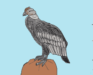 How to draw a Andean Condor step by step - bird drawing easy