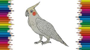 How to draw a Cockatiel easy for kids - Cockatiel Bird drawing and coloring