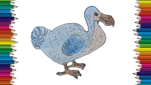 How to draw a Dodo step by step - Dodo drawing and coloring for kids