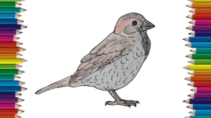 How to draw a Sparrow step by step - Bird drawing easy for kids