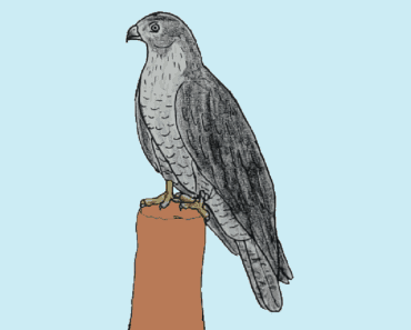 How to draw a black kite easy - Bird drawing step by step