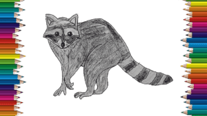 How to draw a raccoon step by step - Raccoon drawing easy for beginners (2)