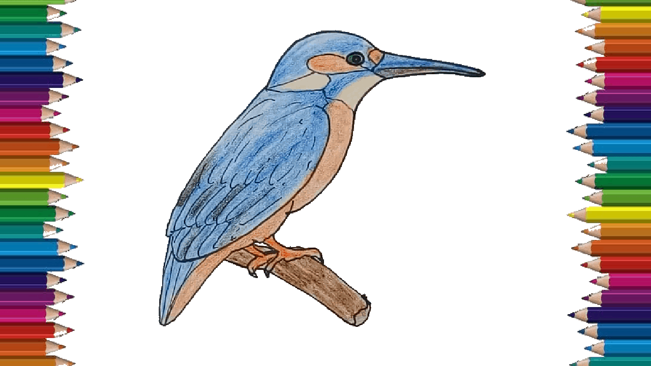 How To Draw A Kingfisher Easy Kingfisher Bird Drawing Easy For Beginners