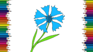 How to draw a cornflower easy - Flower drawing and coloring