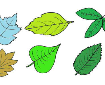 How to draw a leaf step by step - Leaf drawing and coloring for kids
