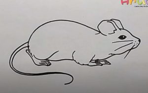 How to Draw a Brown Rat step by step