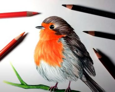 How to Draw a Robin bird step by step