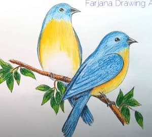 How to draw Eastern Bluebird step by step