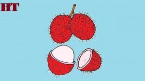 How to draw Rambutan fruit easy