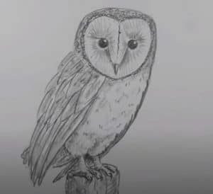 How to draw a Barn Owl step by step