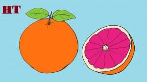 How to draw a Grapefruit easy