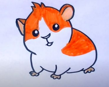How to draw a hamster step by step
