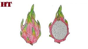 How to draw dragon fruit