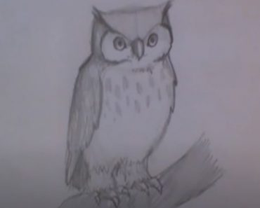 How to Draw a Little Owl