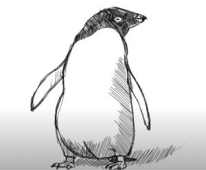 How to Draw an Adelie Penguin