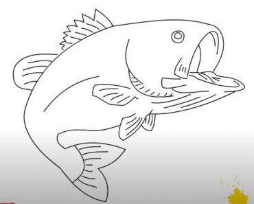 How to draw a bass fish step by step