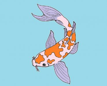 How to draw a koi fish step by step