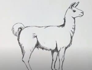 How to draw a llama step by step