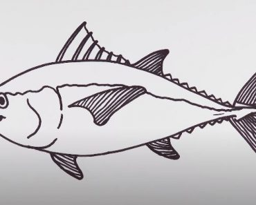 How to draw a tuna fish