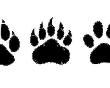 how to draw a paw print