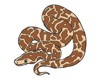 How to Draw a Python