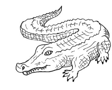 How to draw a alligator