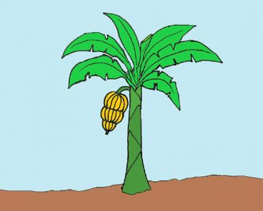 How to draw a banana tree
