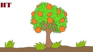 How to draw a orange tree