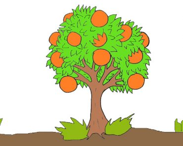 How to draw a orange tree