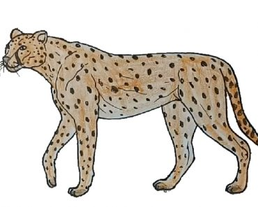 how-to-draw-a-cheetah