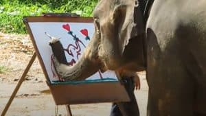 Amazing The Painting Elephant - Painting by animals