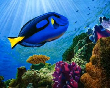 Dory fish drawing in Real Life