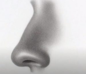 How to Draw a Nose From The Side by pencil
