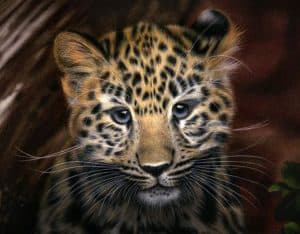 How to draw a leopard face step by step easy