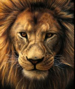 How to draw a realistic lion face step by step