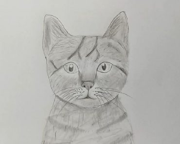 How to draw a cat by pencil step by step