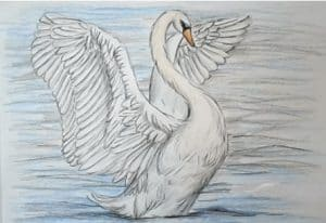 How to Draw a Swan easy for beginners