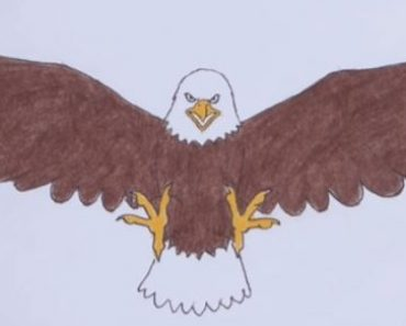 How to draw a bald eagle step by step
