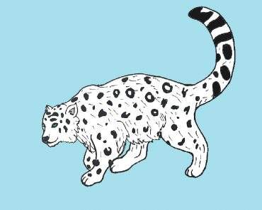 how-to-draw-a-snow-leopard