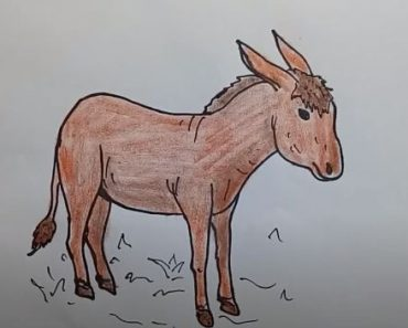 Donkey drawing easy for beginners
