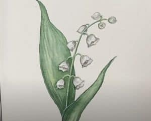 How to Draw a Lily of the Valley step by step