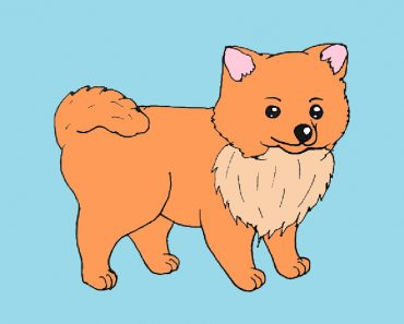 How to Draw a Pomeranian