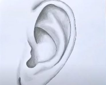 How to draw a ear step by step
