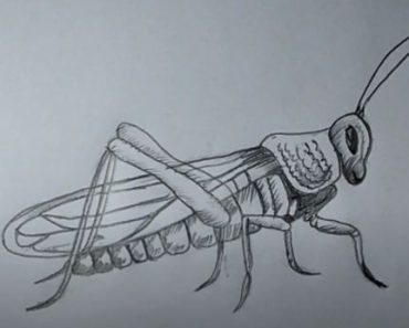 How to draw a grasshopper step by step for beginners